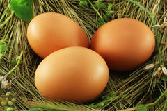 Eieren in het gras Stock Afbeelding
