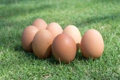 Eieren in het groene gras Royalty-vrije Stock Afbeeldingen
