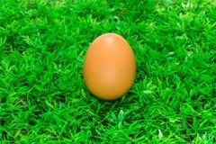 Eieren in het groene gras Royalty-vrije Stock Afbeelding