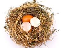 Eieren in het nest Stock Foto