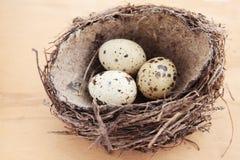 Eieren in het nest Royalty-vrije Stock Foto
