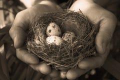 Eieren in het nest Stock Fotografie