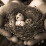 Eieren in het nest Royalty-vrije Stock Fotografie
