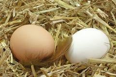 Eieren in het Nest Royalty-vrije Stock Afbeelding