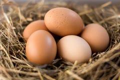 Eieren in het nest van stro Stock Foto