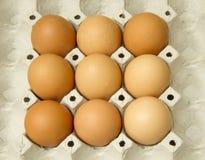 Eieren in het pakket Stock Fotografie