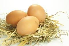 Eieren in het stro Royalty-vrije Stock Foto's