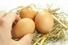 Eieren in het stro Stock Afbeelding