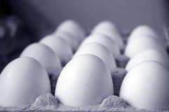 Eieren in karton Royalty-vrije Stock Foto's