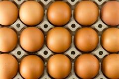 Eieren in kartondienblad Royalty-vrije Stock Foto