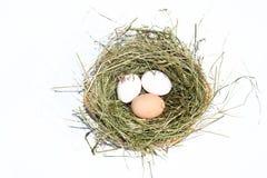 Eieren in nest royalty-vrije stock afbeelding