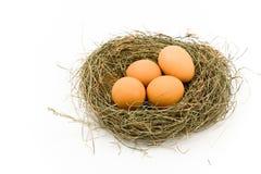 Eieren in Nest Royalty-vrije Stock Foto