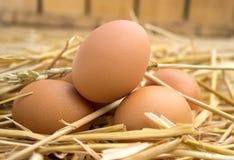 Eieren in nest Stock Afbeeldingen