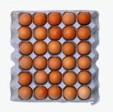 Eieren op de plaat Stock Foto