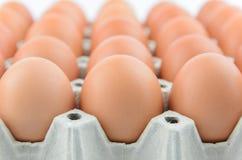 Eieren op dienblad Royalty-vrije Stock Fotografie