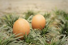 Eieren op een achtergrond van groen gras Royalty-vrije Stock Afbeelding