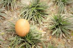 Eieren op een achtergrond van groen gras Royalty-vrije Stock Foto's