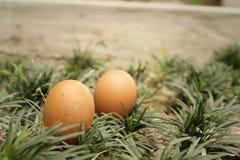Eieren op een achtergrond van groen gras Royalty-vrije Stock Fotografie