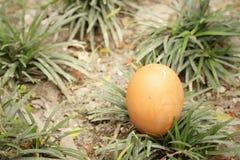 Eieren op een achtergrond van groen gras Stock Afbeeldingen