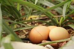 Eieren op een achtergrond van groen gras Stock Fotografie