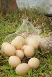Eieren op een achtergrond van groen gras bij het park Royalty-vrije Stock Fotografie