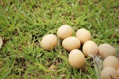 Eieren op een achtergrond van groen gras bij het park Royalty-vrije Stock Afbeelding