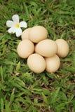 Eieren op een achtergrond van groen gras bij het park Stock Afbeeldingen
