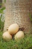 Eieren op een achtergrond van groen gras bij het park Stock Foto's