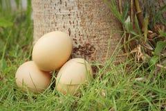 Eieren op een achtergrond van groen gras bij het park Stock Fotografie