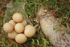 Eieren op een achtergrond van groen gras bij het park Stock Afbeelding