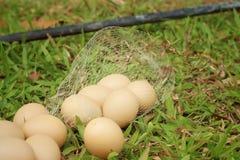Eieren op een achtergrond van groen gras bij het park Royalty-vrije Stock Afbeeldingen