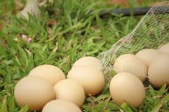 Eieren op een achtergrond van groen gras bij het park Royalty-vrije Stock Foto's