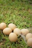 Eieren op een achtergrond van groen gras bij het park Stock Foto
