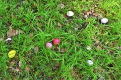 Eieren op een mand stock afbeelding