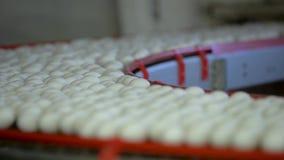 Eieren op een transportband Langzame Motie stock footage