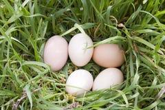 Eieren op gras Stock Afbeelding