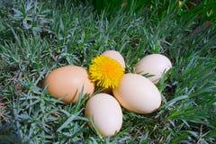 Eieren op gras Royalty-vrije Stock Foto's