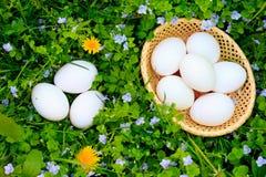 Eieren op gras Stock Fotografie