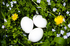 Eieren op gras Royalty-vrije Stock Foto