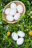 Eieren op gras Royalty-vrije Stock Afbeeldingen
