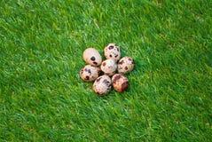 Eieren op gras Stock Foto