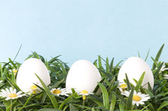 Eieren op gras Stock Foto's