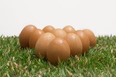 Eieren op het gras Stock Afbeelding