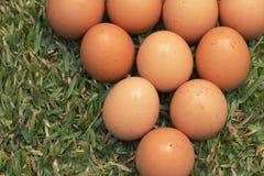 Eieren op het gras Royalty-vrije Stock Afbeelding