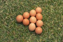Eieren op het gras Stock Foto's