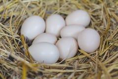 Eieren op het hooinest in de natuurlijke mand kippen stock afbeeldingen