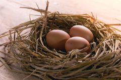 Eieren op Hoektand stock afbeeldingen