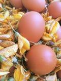 Eieren op sesbania bloemen Royalty-vrije Stock Afbeeldingen