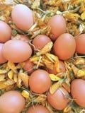 Eieren op sesbania bloemen Royalty-vrije Stock Foto