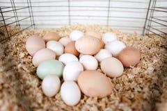 Eieren op spaanders Royalty-vrije Stock Foto